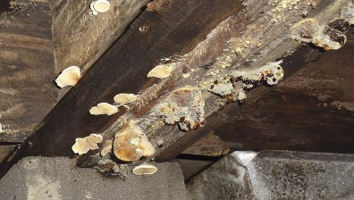mold-and-fungus-issues-in-houses